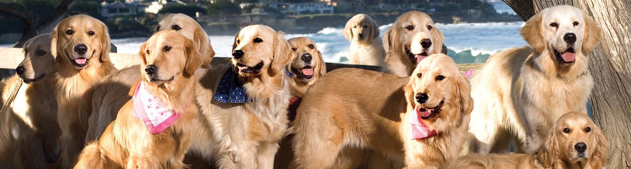 Dog Friendly Carmel-by-the-Sea, California