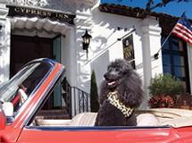 carmel dog friendly hotels